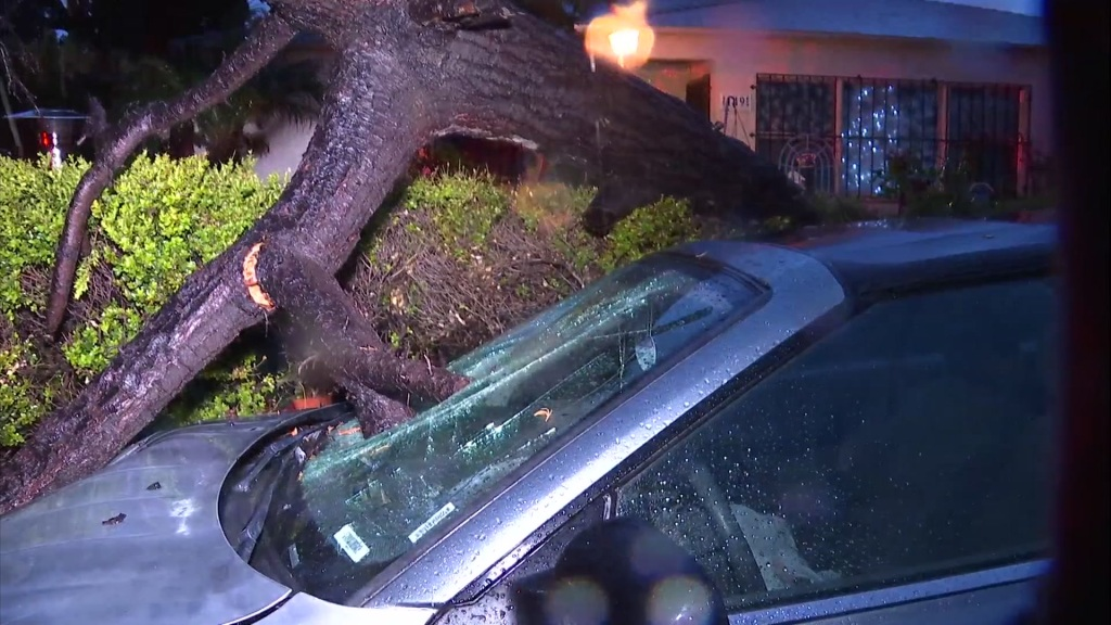 Tree crashes through car in National City.