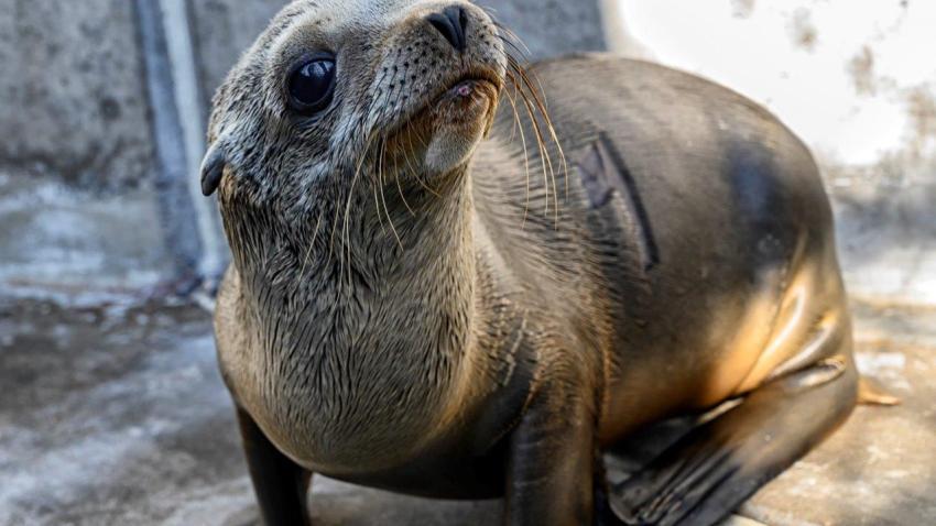 SeaWorld Rescued Sea Lions