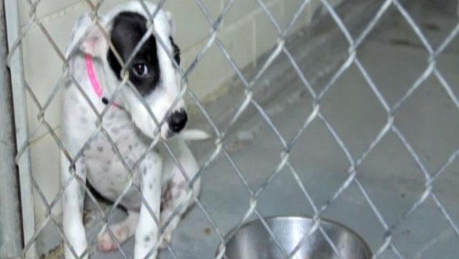 TLMD-mascota-adopcion-