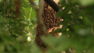bee hive swarm