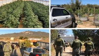 Decomisan 10 toneladas de marihuana en Hemet