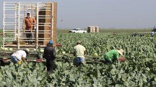 trabajadores-migrantes-agri