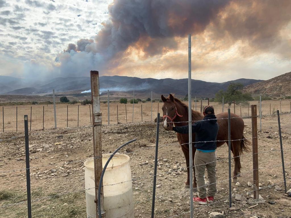 caballo frente a incendio Tecate (1)