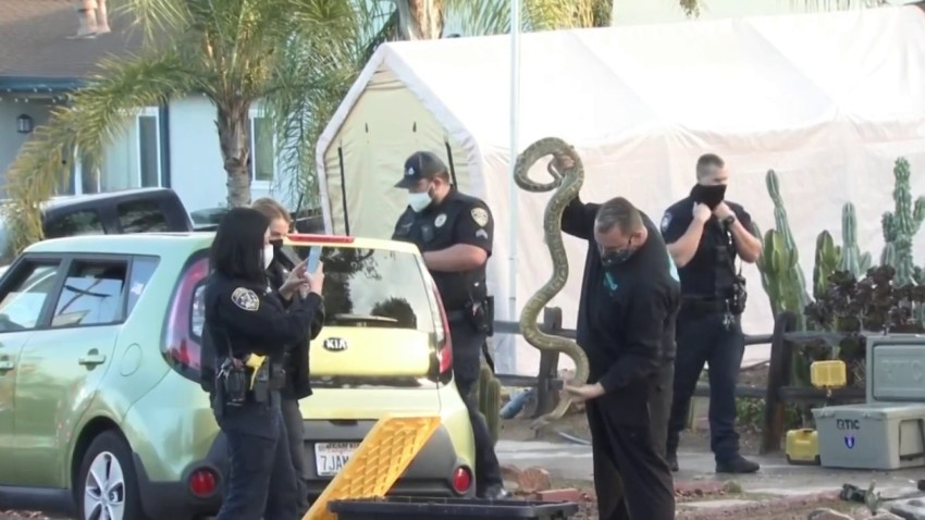 Fire at El Cajon home filled with rats and snakes