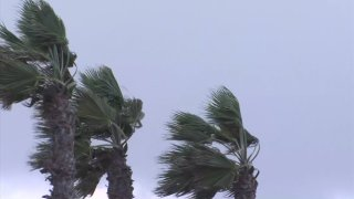 Gusts sway palm trees on a windy day in San Diego County.